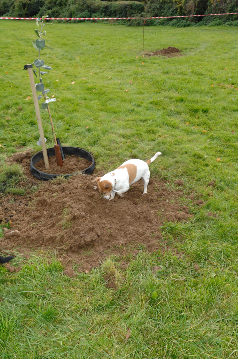 This Jack Russell and eight or so other dogs enjoyed the occasion as much as children and adults