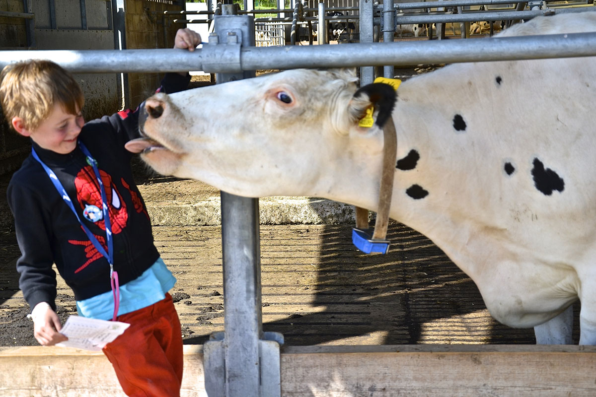 Milo (6) comes face to face with a friendly cow