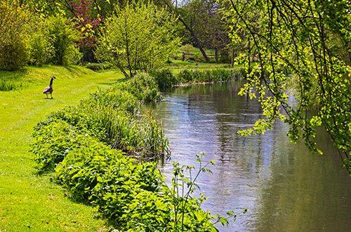 River Kennet, courtesy of Philip Perkins' 'Beautiful Kennet' calendar