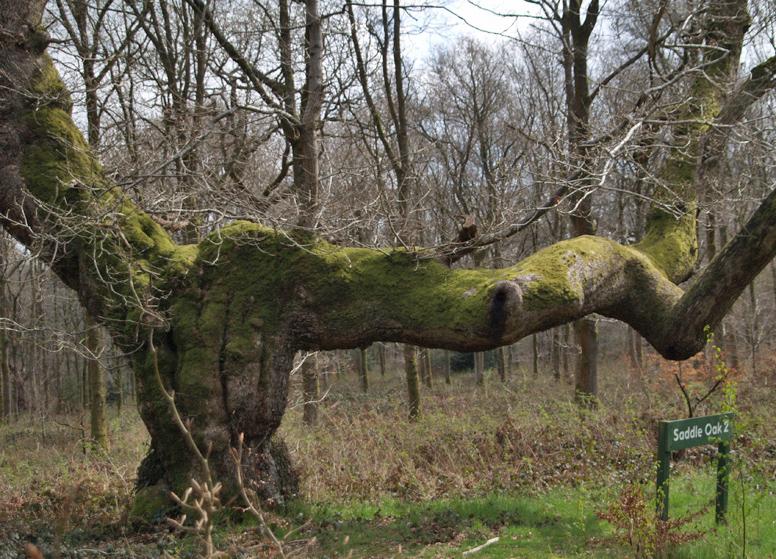 Saddle Oak 2