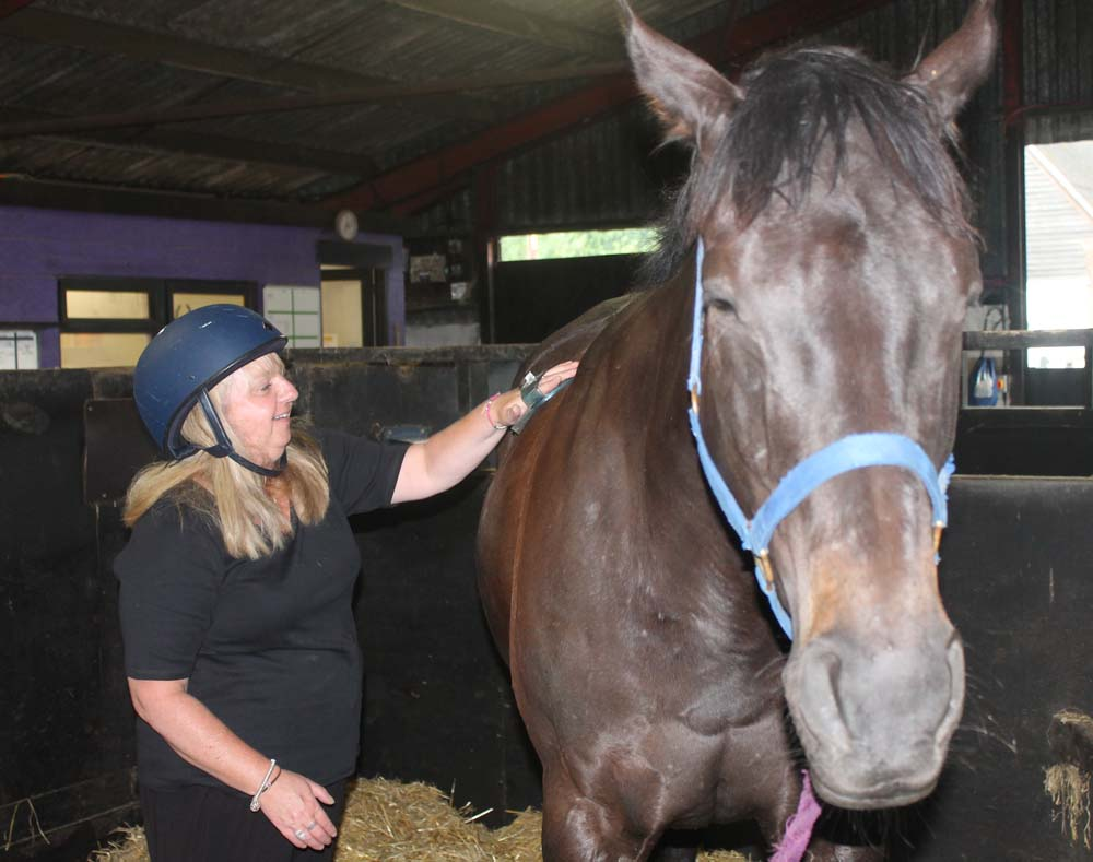 Linda grooming one of Greatwood's former racehorses