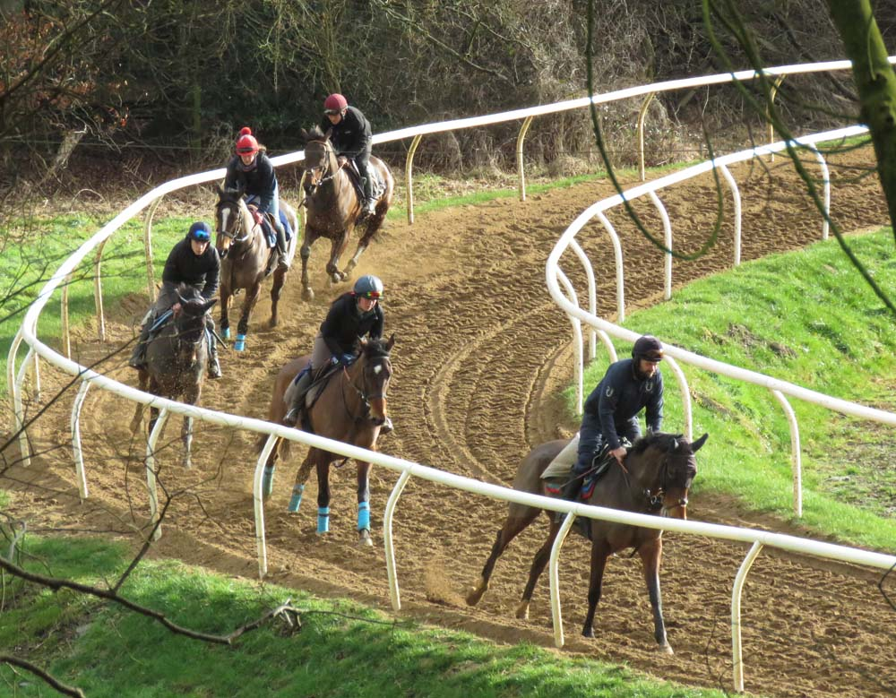 ...as some of the Bonita racehorses exercise on the sand ring