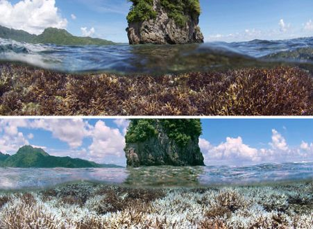 Reef in American Soma. Top: Dec 2014. Bottom: Same location 3 months later. Credit: The Ocean Agency / XL Catlin Seaview Survey