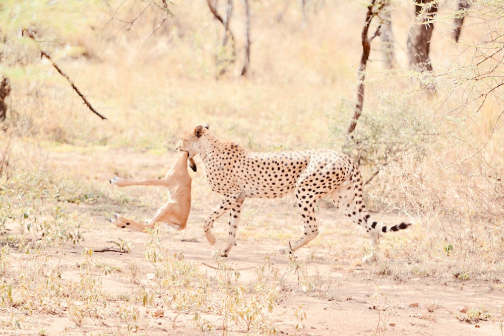 On safari - this photo was taken by one of the Luna Safari guests