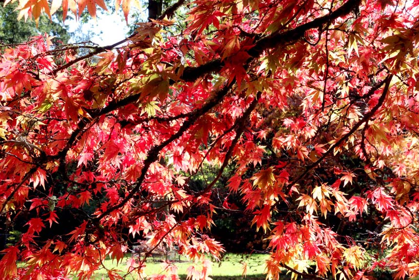 October in Westonbirt Aboretum (Photo: Eric Gilbert)