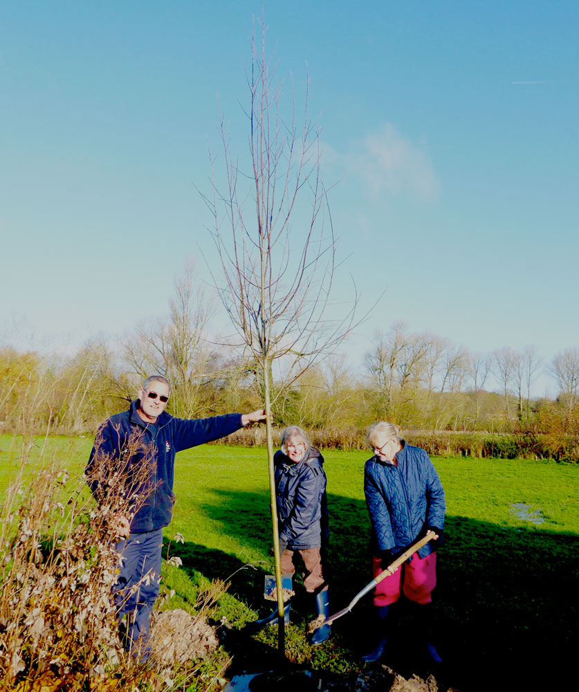 Janet Louth and Gill Wallis with the White Willow and Marlborough Town Council Head Groundsman Nigel Weathery.