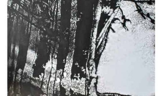 Edward Twohig : The Master's garden - late November 2019