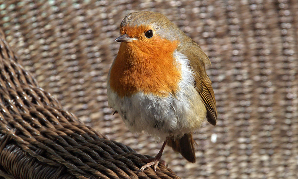 Picture of Bird