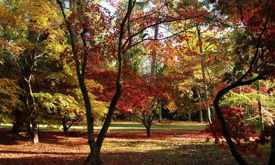 Westonbirt Arboretum on an early Autumn da